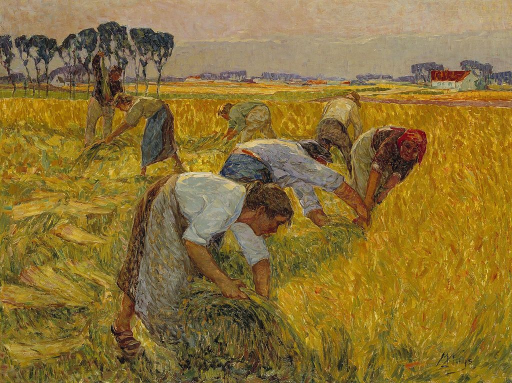 Flax harvest by Modest Huys